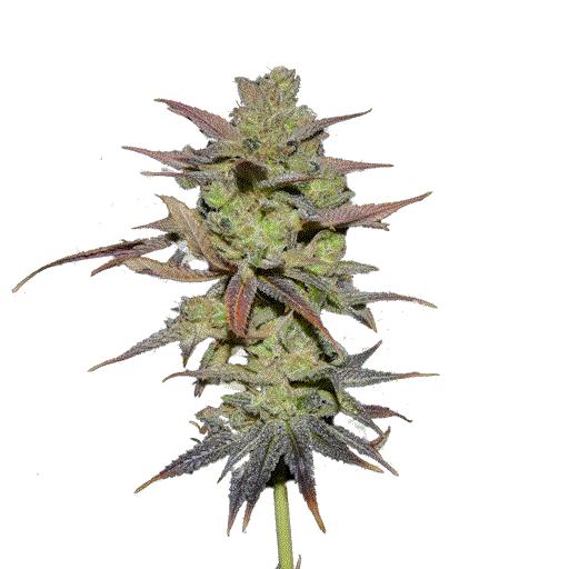 www.oracleseeds.com